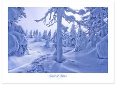 Silence (Imapix) Tags: winter snow canada tree art nature canon photography photo foto photographie quebec hiver qubec silence neige imapix gaetanbourque valledesfantmes 100commentgroup