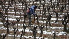 Le tailleur de vigne et son chien (brigeham34) Tags: winter snow landscapes vines hiver neige coldweather aude vignes froid paysages minervois languedocroussillon randonnée olonzac lapierretourril