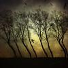 Birds and trees (genevieve van doren) Tags: trees sky birds canal ciel arbres chanel oiseaux bratanesque