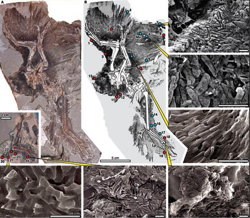 scanning electron microscopy thesis
