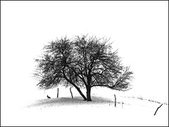 Outlook (RainerSchuetz) Tags: winter snow tree rabbit fence treesilhouette highkey winterlandscape wow1 wow2 wow3 wow4 vob wow5 abigfave naturewatcher thesecretlifeoftrees artofimages bestcapturesaoi yourwonderland coth5 elitegalleryaoi mygearandmepremium mygearandmebronze mygearandmesilver
