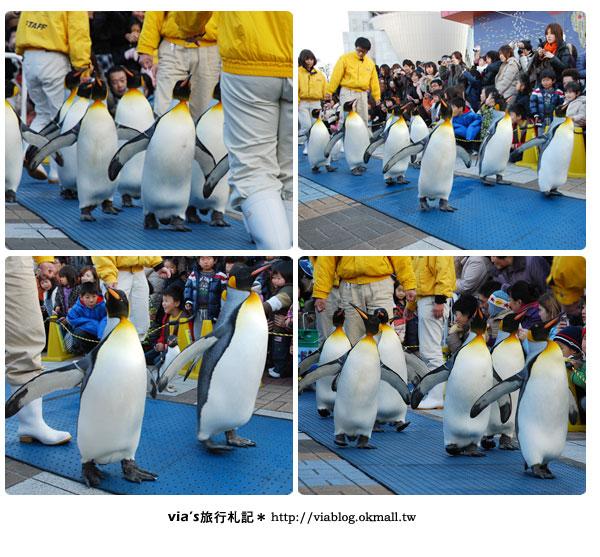 【via關西冬遊記】大阪海遊館~冬季限定!無敵可愛企鵝遊行來囉!24