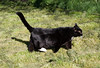 Hey, I'd better go check out my catnip patch! (Librarianguish) Tags: home cat garden feline chat nolan kitty sunny tuxedocat 210 unseasonablywarm