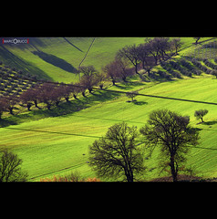 the end of the winter (MarcoBucci) Tags: winter green country hills campagna inverno marche colline ancona bucci marcobucci theauthorsclub