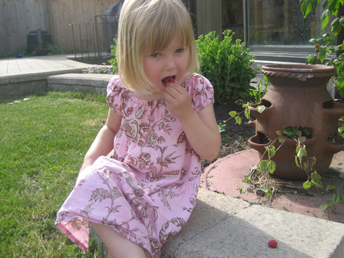 4-year-old Hannah eating raspberries