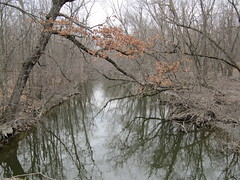 Harms Woods (amoran773) Tags: trees woods cookcountyforestpreserve northbranchchicagoriver
