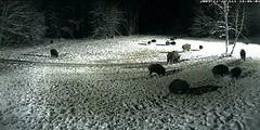 Cães - Caça - Pesca - Natureza - Portal 4472951140_cd9ff82d8a_m