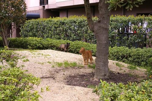 Today's Cat@2010-04-09
