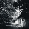Trespassing (Malou Sinding) Tags: trees shadow blackandwhite bw monochrome sunshine mediumformat blackwhite village monochromatic vision 6x7 quietness treeleaves 65mm mamiya7 standdevelopment autaut malousinding