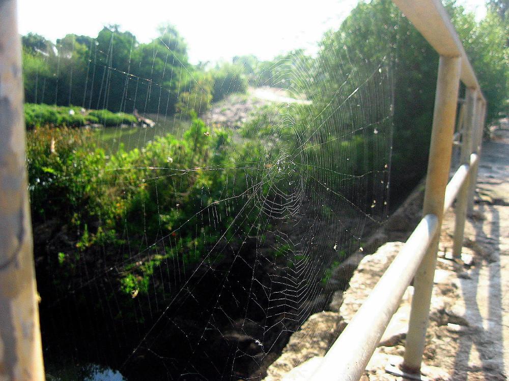 04-06-2011-a-huge-web4