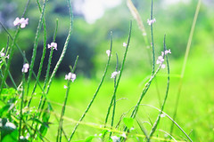 grass (chezstar_06) Tags: pink flowers green nature leaves photoshop cherry landscape lanscape earldolphy litratisticaimages