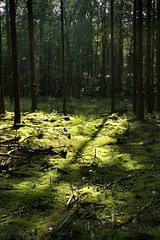 Light and shadow play on a moss carpet (joeke pieters) Tags: wood light shadow nature forest woodland mos germany carpet licht moss schaduw lanscape ahaus cycletour tapijt diebrcke