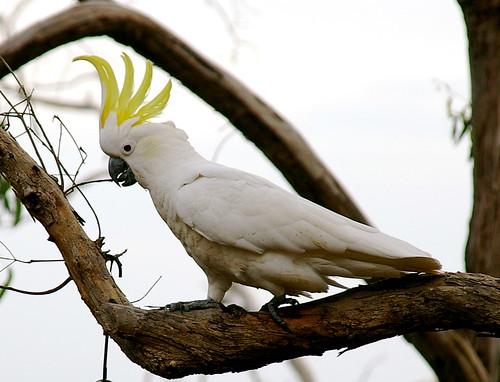 cheeky beaks