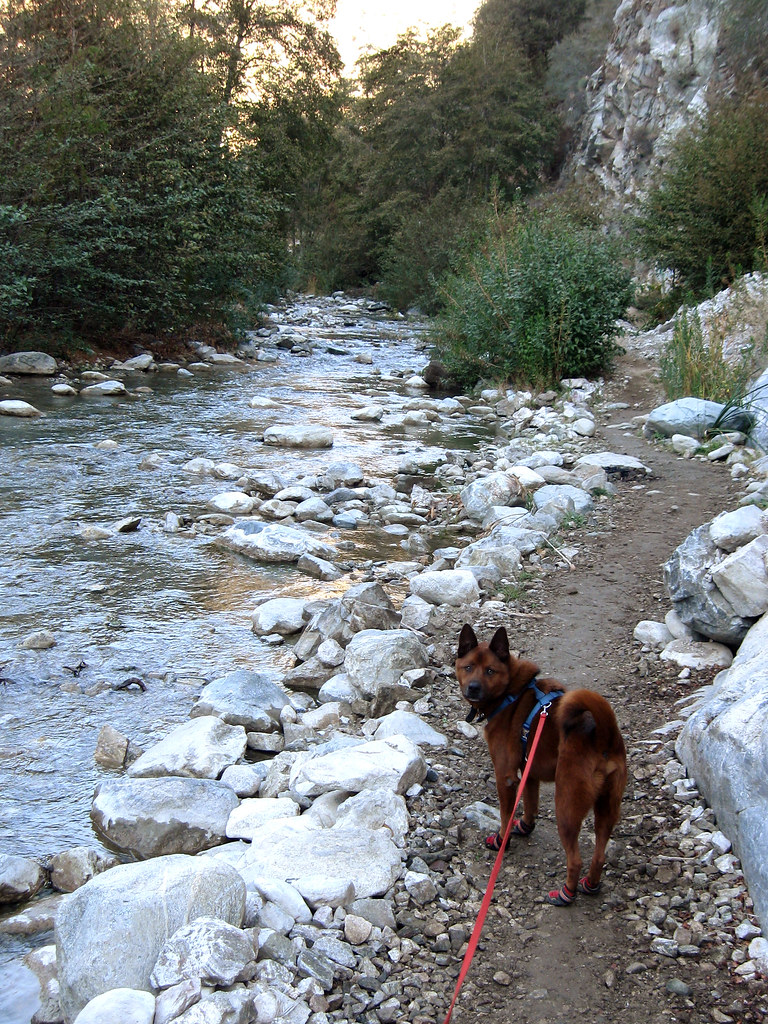 Cisco and the East Fork