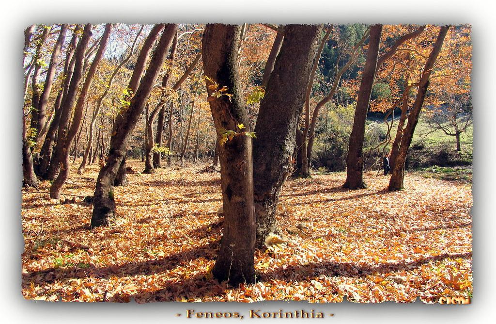 helen_trees2_zoom
