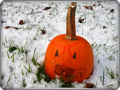 RESPECT THE PUMPKIN (delitefulimage) Tags: ocean california winter vacation orange holiday snow fall ice beach nature water grass pumpkin interesting frost jackolantern authority lawn carribean frosty sycamore getty sponge deliterfulimage