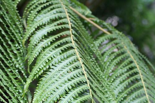 20090919 Edinburgh 20 Royal Botanic Garden 064