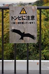 Tokyo 2009 - 鎌倉 - 長谷寺(16)