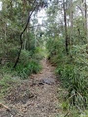 Mosquito Creek Crossing