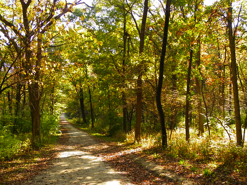 Autumn in Swallow Cliff Woods (Cook County Forest Preserve), Palos Park, IL  (43)