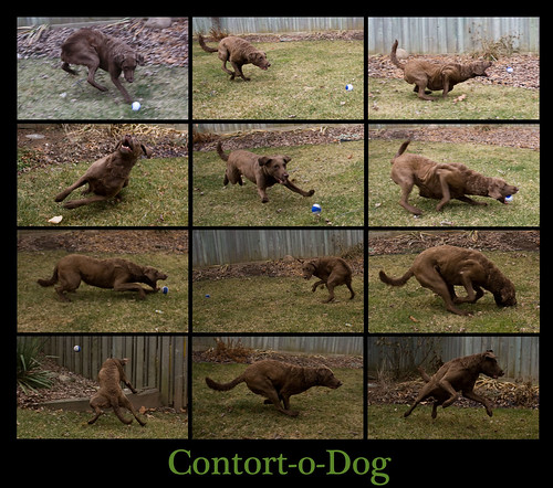 Contort-o-dog (3/52 outtakes)
