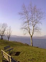 giornata blu dopo tanto grigio (Marsala Florio) Tags: cameraphone lake camphone lago nokia benches panchine lagodipusiano grouptripod