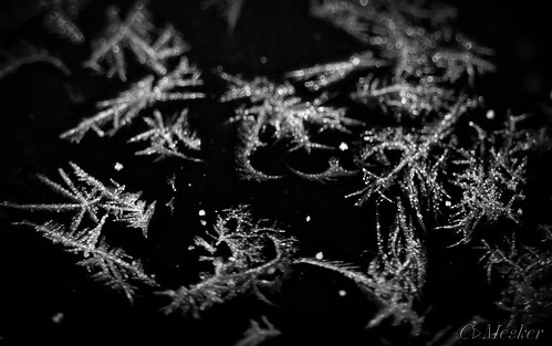 Frosted Flakes - 38/365