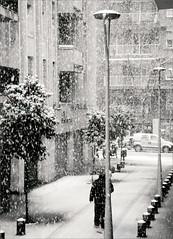 ho haveu vist aix!!! 1[2]34 (bNat!) Tags: barcelona bw white snow storm man cold byn blanco home silhouette umbrella blackwhite nieve nevada bcn snowstorm bn bin fred tormenta oranges silueta snowfall paraguas blanc frio neu naranjas tempesta blanconegro 2022 nevadahistorica taronges winterolympics eixample paraiges ilovebcn passatgebocabella viscabcn historicsnowstorm bcnnevadaijoamblacmeraespatllada snowinginbarcelonaandmycamerabroken hohaveuvistaix quinanevada whatasnowstorm ungrandiaperestrenarfeinap barcelonainwhite entrerogerdeflorinpols quinarasca 08032010 menudanevada barcelona2022 pernosermenysiparticiparenlasaturacideflickambfotosdebarcelonanevadad quideiaquebarcelonanopodiaorganitzarunsjocsolmpicsdhivern
