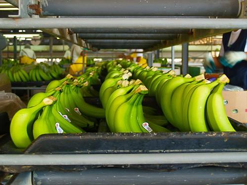 TorqueBox: Clustering is bananas in TorqueBox