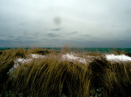 Beach Grass, Long Island, February 2010