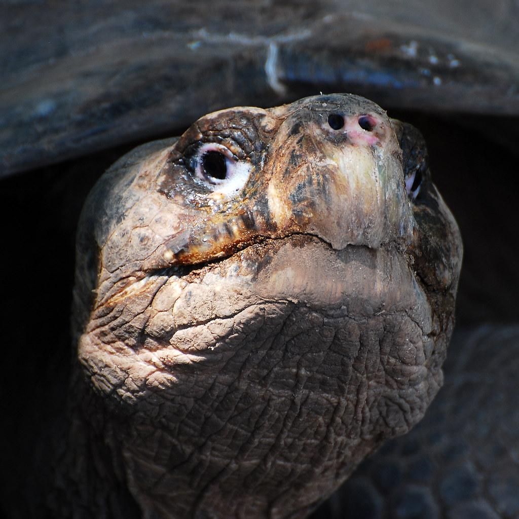 Galapagos Islands-647