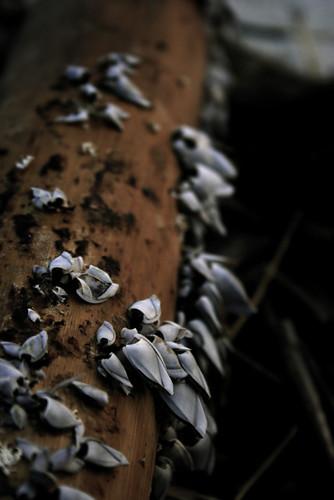 haiwan menempel di batang buluh~
