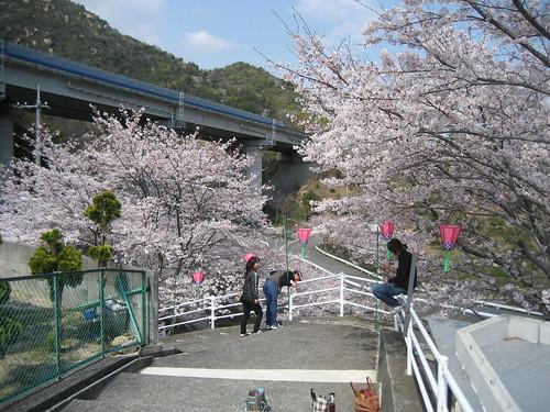 広島 桜 スポット