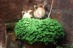 IMG_2259_b (Acchiapparatti) Tags: green canon italia distillery umbria orvieto verdi trifoglio colorsofnature eos450d coloridellanatura