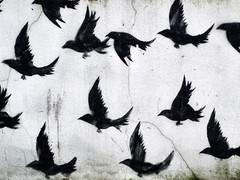 Karasu (sunny-drunk) Tags: london birds shoreditch utata rhizome karasu masahisa fukase utata:color=black flickraward bwartaward vanagram creattività art2011
