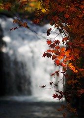 Fall leaves, Fall waterfall (jasohill) Tags: autumn red fall nature colors leaves yellow japan photography japanese waterfall dream scene frame backgrounds     akita 2009 tohoku   50d jasohill kazuno canon50d superaplus aplusphoto platinumheartaward fotocompetition vanagram fotocompetitionbronze flickrstruereflection1