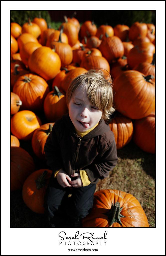 pumpkins 34