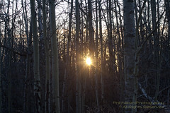 Elk Island (philinalberta) Tags: park trees sun sunrise canon woods edmonton wildlife alberta elkisland naturepark rebelxti astotinlake