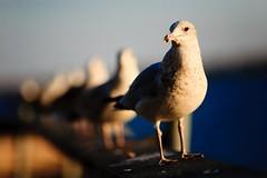 Pigeon Echo (RielLanart) Tags: street november toronto downtown random pigeon echo saturday fractal shooting 2009 repeat