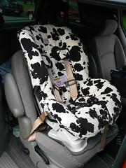 Cow seat properly put into the car