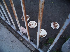 Here Kitty Kitty (Renee Rendler-Kaplan) Tags: california morning travel november cats breakfast cat losangeles parkinglot rust gate picnic kodak homeless kitty eaten catfood hollywood kodakeasyshare 2009 paperplates hollywoodcalifornia laist walkingthedog betweenarockandahardplace kindnessofstrangers feedingthekitty reneerendlerkaplan whatisawonmyvacation
