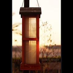 bird feeder (alvin lamucho ) Tags: morning sunlight bird leaves sunrise canon garden 50mm early glow bokeh matthew f14 branches feeder newyear flare bible hanging worry rays feed streaks twigs depth f28 rebelt1i alvinlamucho