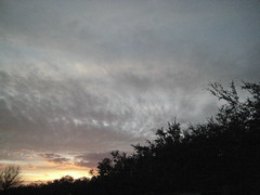 Winter Evening (Jayanthi Sreejith) Tags: differentmoods texansky differentplaces