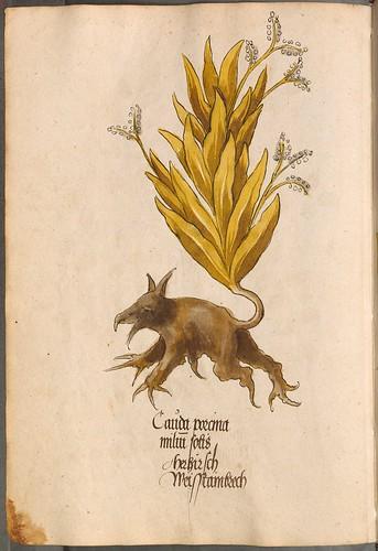 Arzneipflanzenbuch, 1525 a