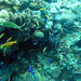 Diving in Balicasag Island in Bohol
