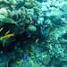 Diving in Balicasag Island in Bohol