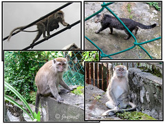 Monkeys and cat prowling outside our backyard