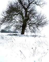 Contrasty Tree