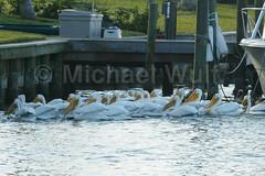 Wulf_Birds_03_10 (MikeWulf) Tags: birds michael florida wulf