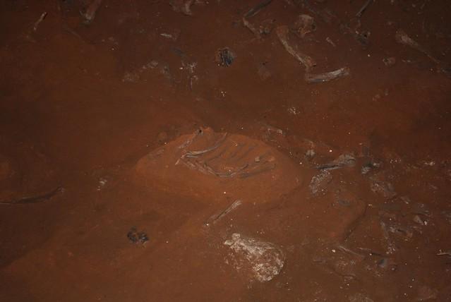 Fossilised (rib) bones - Victoria Fossil Cave